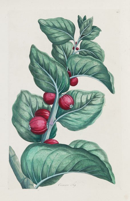 20: 23 botany engravings, 19 from John Hill, c.1775