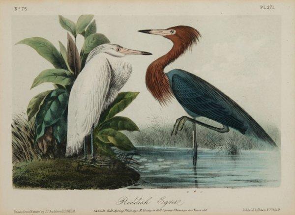 5: 2 lithos from Audubon Birds of America.