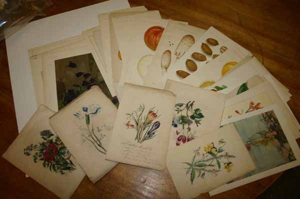 4920: ~57 color lithographs: Fruits, flowers, etc.