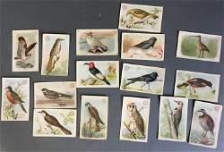 Over 75 baking soda cards featuring birds.