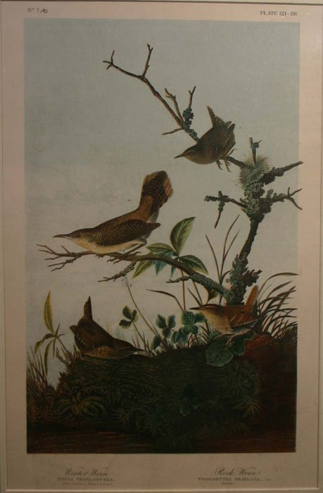 10: Audubon, ''Winter Wren/ Rock Wren,'' folio edition.