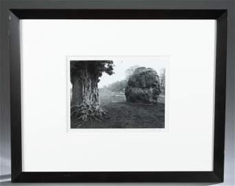 Caponigro. Silver Print. Stone & Tree. 1967.