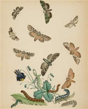 [Natural History]. H. N. Humphreys. 2 color litho