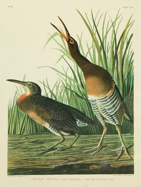 1004: Audubon, John J. (after). 3 Finely Engraved Plate