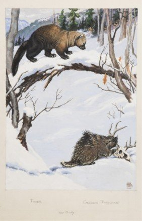 Jacob Bates Abbott Fisher And Porcupine, Gouache.