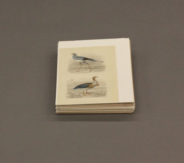 Group of 14 Color Ornithological Prints