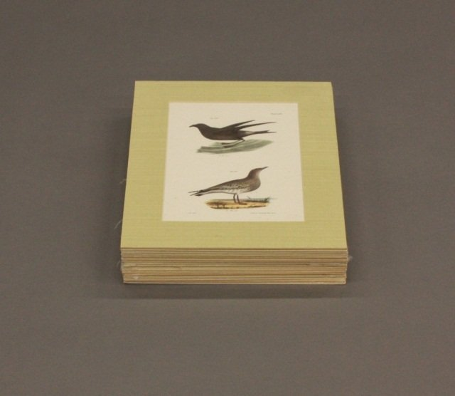 Group of 17 Color Ornithological Lithographs