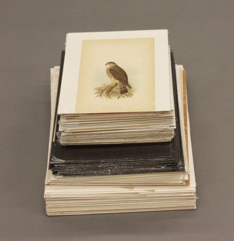 Large Group of Color Ornithological Prints