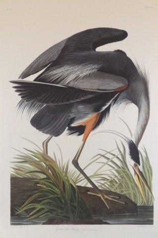 Audubon, Great Blue Heron.