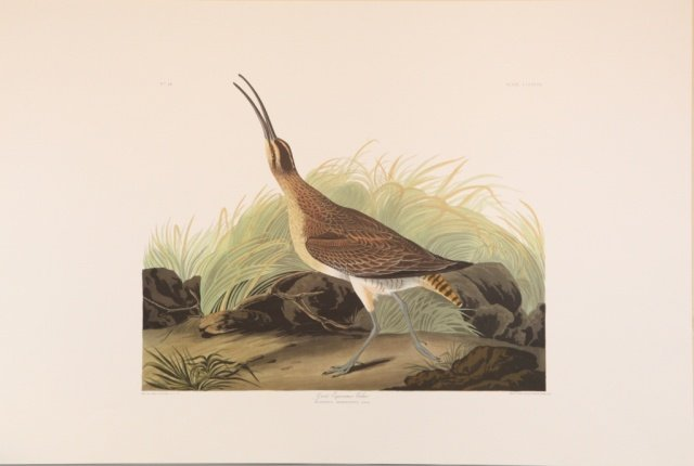 Audubon, selection of 9 prints.