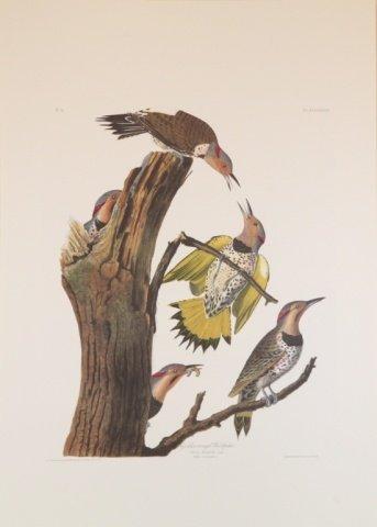 Audubon, selection of 10 prints.