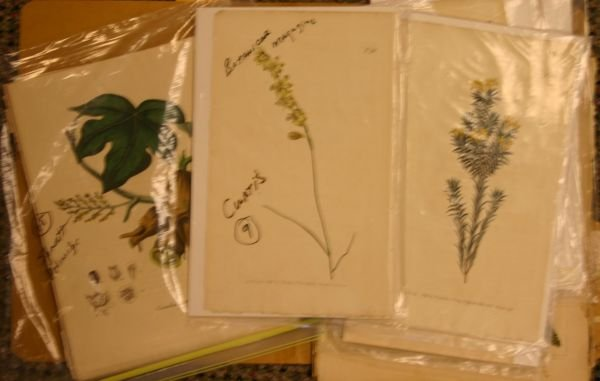 11: [Botany]. 67 colored engravings. First two gr