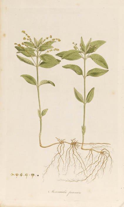 12: [Botany]. 7 Prints. ++ 4 hand-colored engravi