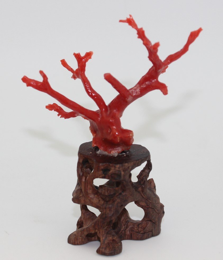 NATURAL RED CORAL SCULPTURE WITH WOOD BASE