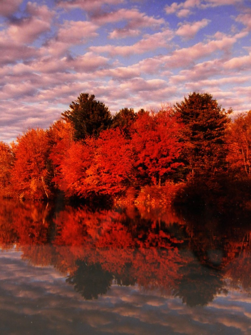 Framed Photograph by John David Geery of Autumn