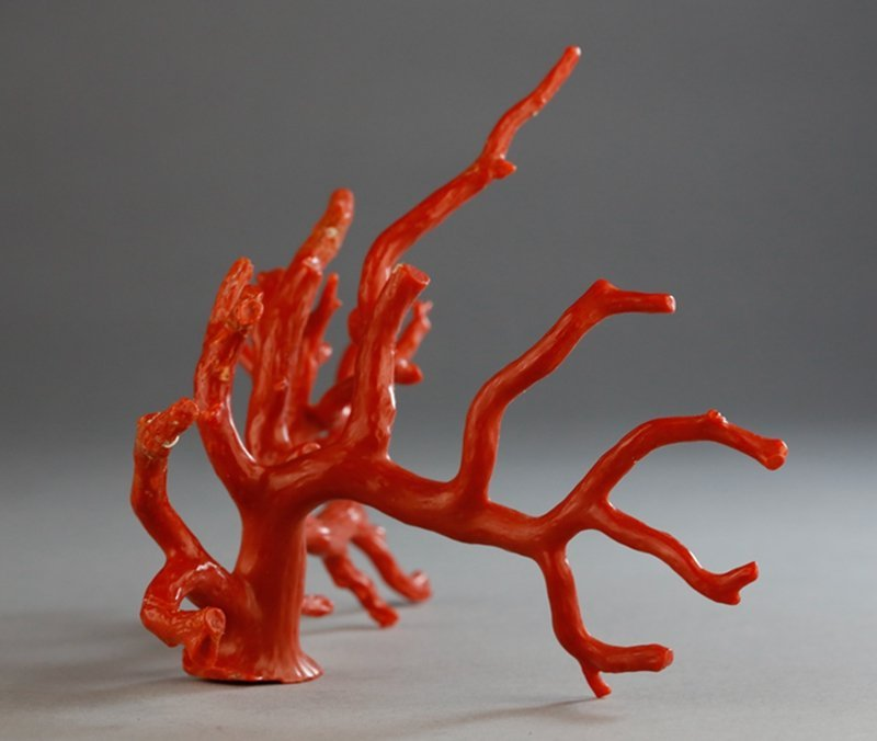 A NATURAL RED CORAL BRANCH - 3