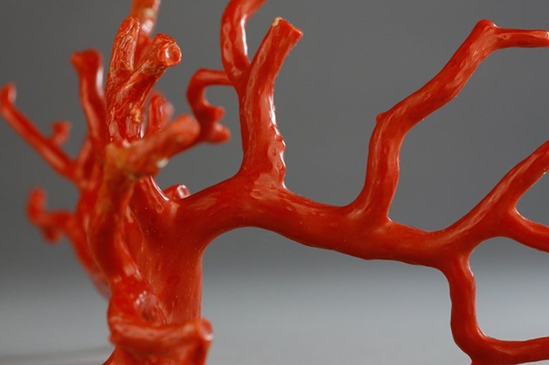 A NATURAL RED CORAL BRANCH - 5