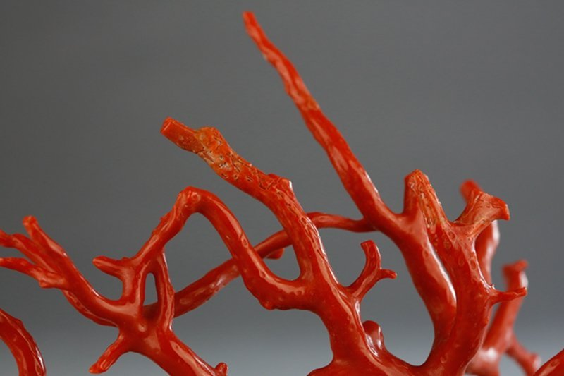 A NATURAL RED CORAL BRANCH - 6