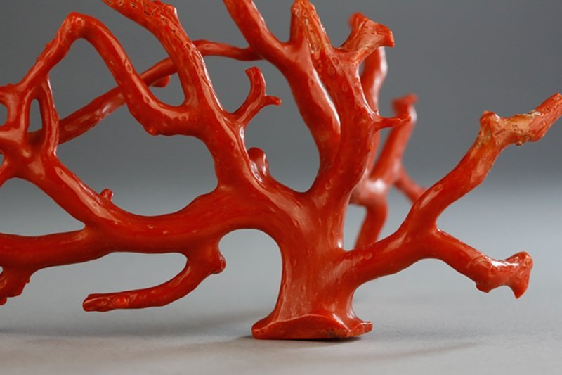 A NATURAL RED CORAL BRANCH - 7