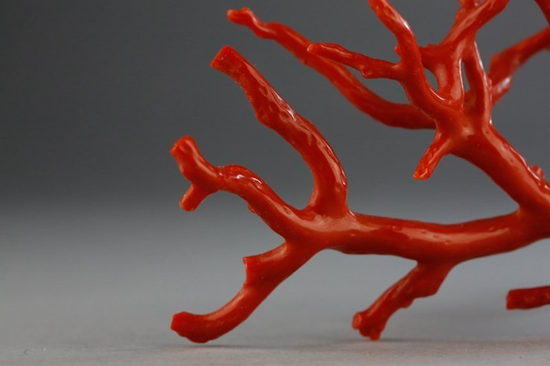 A NATURAL RED CORAL BRANCH - 8