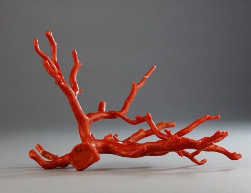 A NATURAL RED CORAL BRANCH - 9
