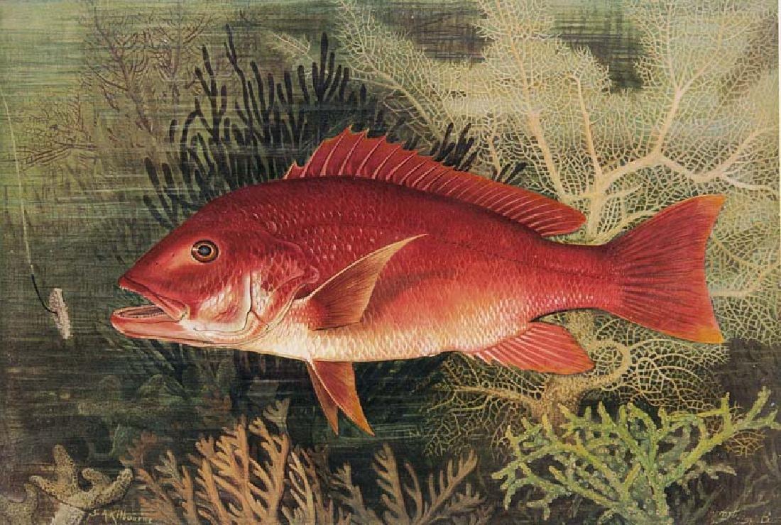 Goode, George Brown u. Samuel A. Kilbourne Game Fishes