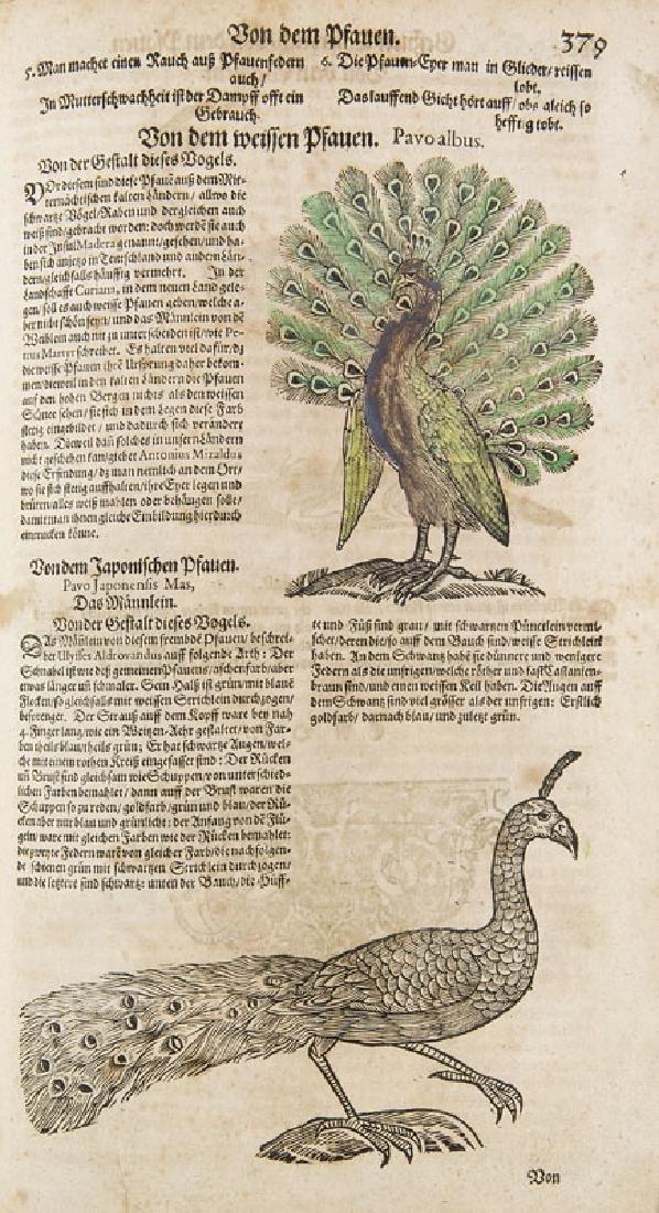 Gesner, Conrad Allgemeines Thier-Buch Oder: Gesnerus - 3