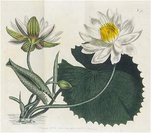 Curtis, William The Botanical Magazine or,