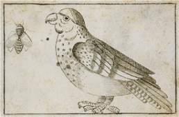 Natural History Manuskript. Album mit