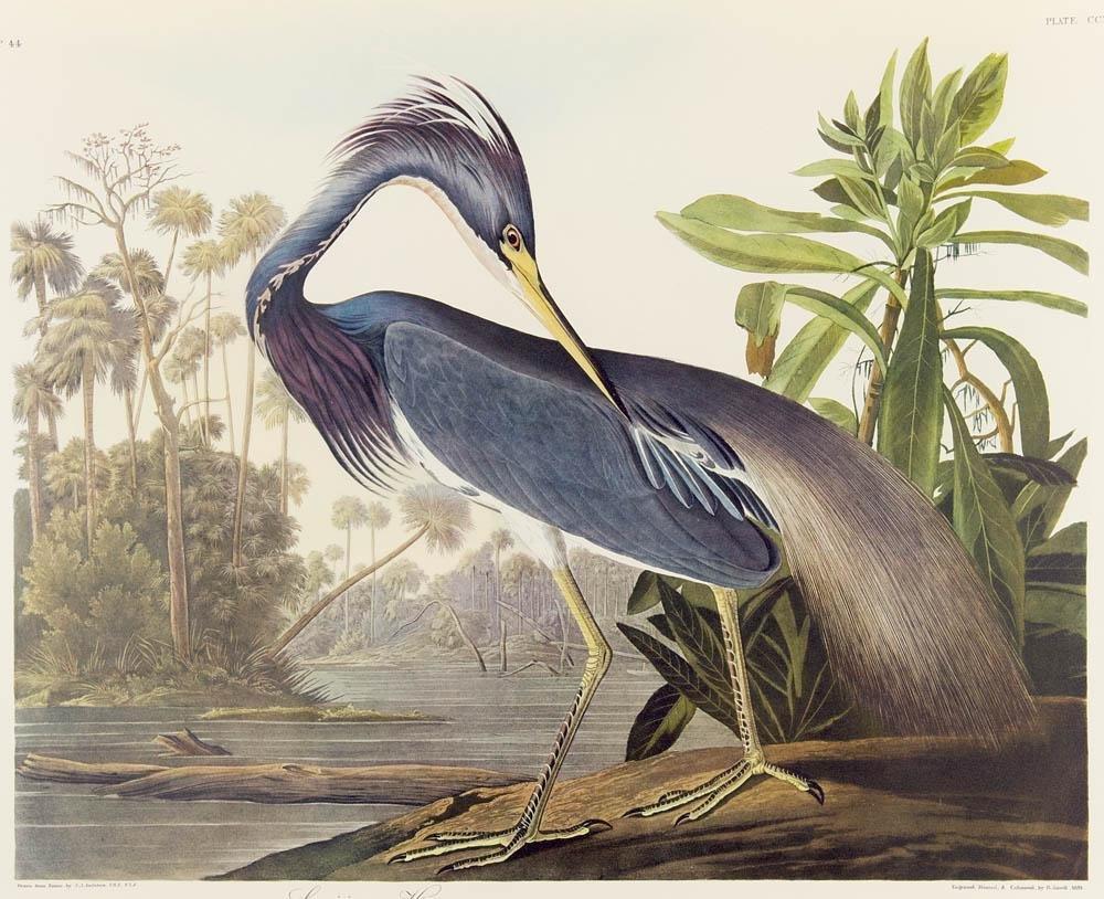 Audubon, John James The Birds of America. Eine Auswahl