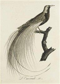 Audebert, J.B. u. L.P. Vieillot Oiseaux dorés ou
