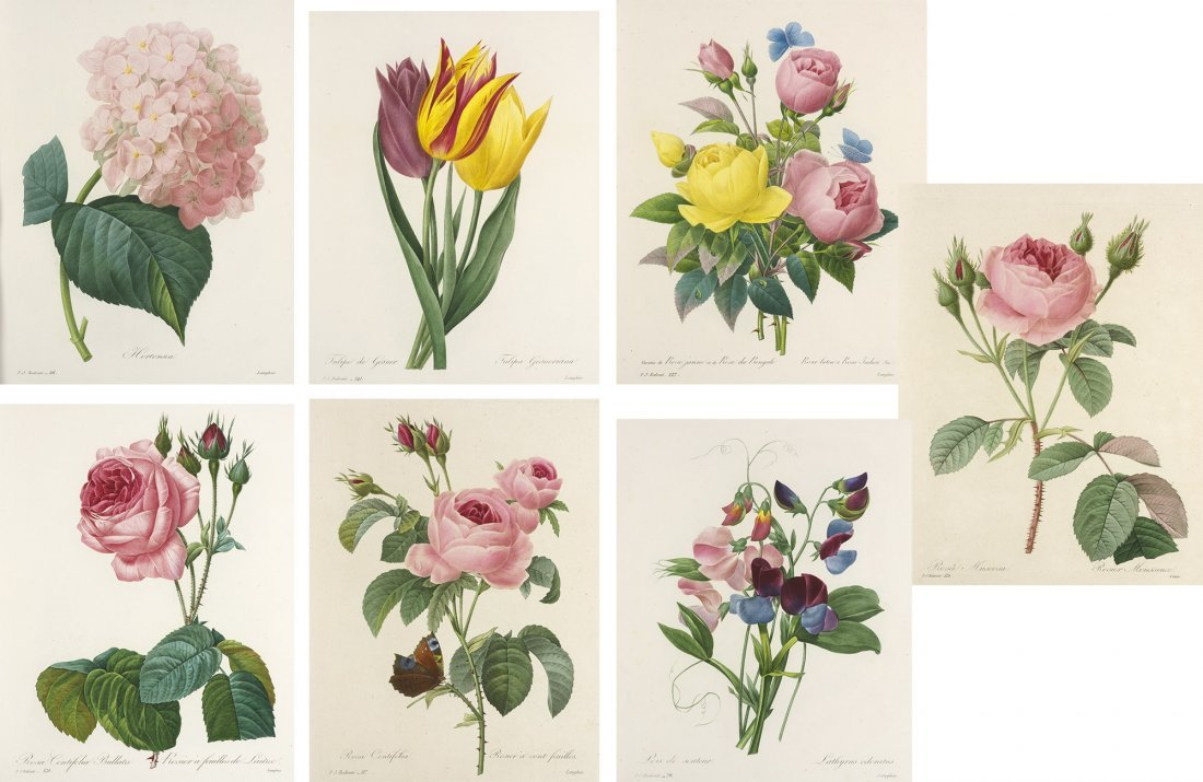 Redoute Roses Botany 1835 144 plates Flowers