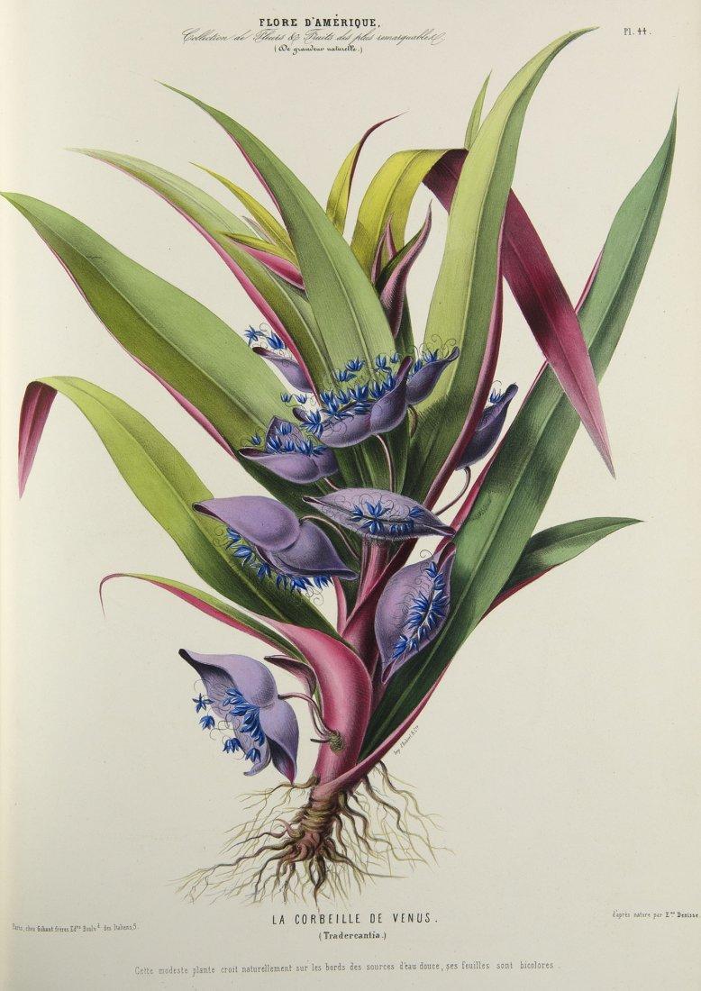 Flore d'Amerique 1843 Denisse Botany lithographs Rare