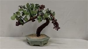 Jade Bonzi Grape Tree