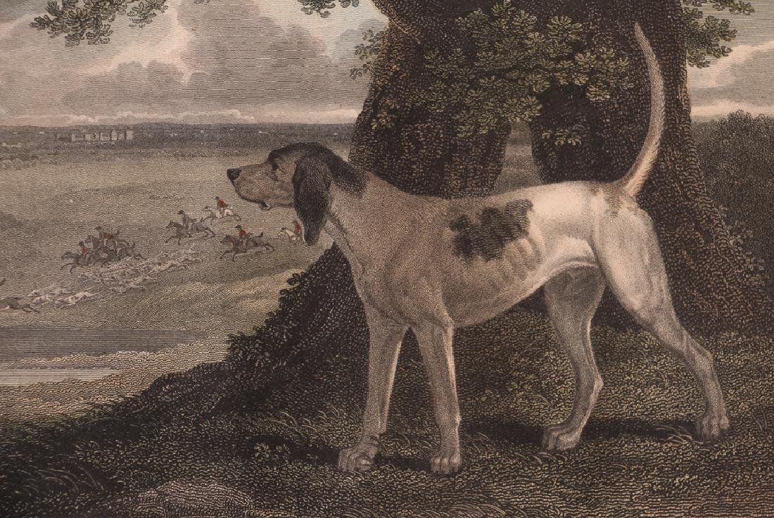 2 Hunting Dog engravings after Reinagle Stag Hound & - 10