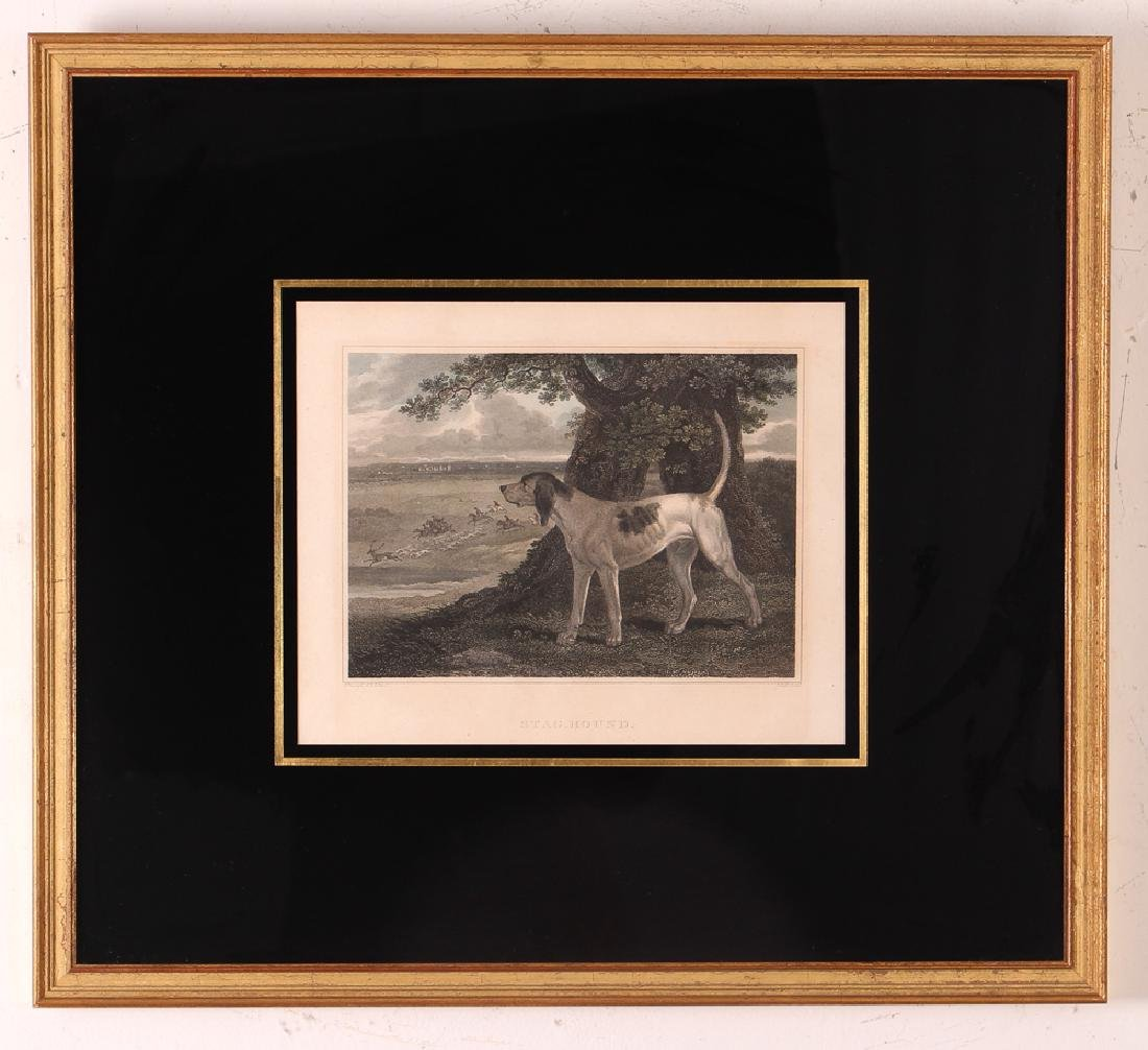 2 Hunting Dog engravings after Reinagle Stag Hound & - 6