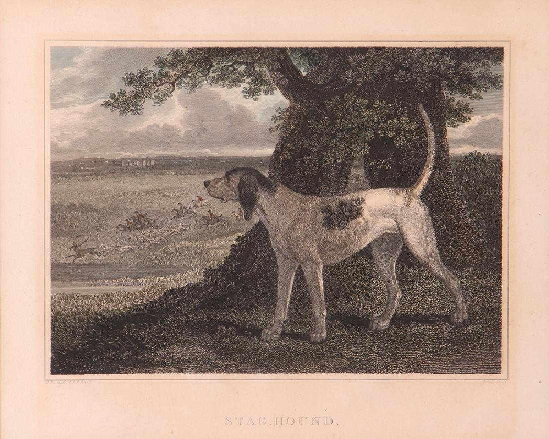 2 Hunting Dog engravings after Reinagle Stag Hound & - 7