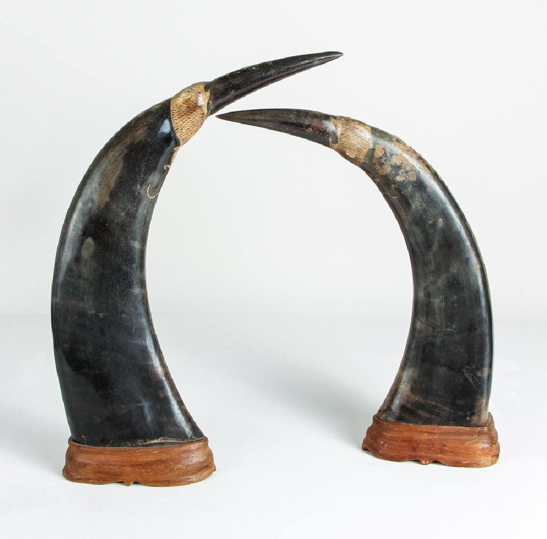 Pair of Carved Oxen Horns with Oriental Design - 4