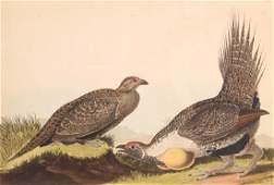John James Audubon Havell Edition Cock of the Plains