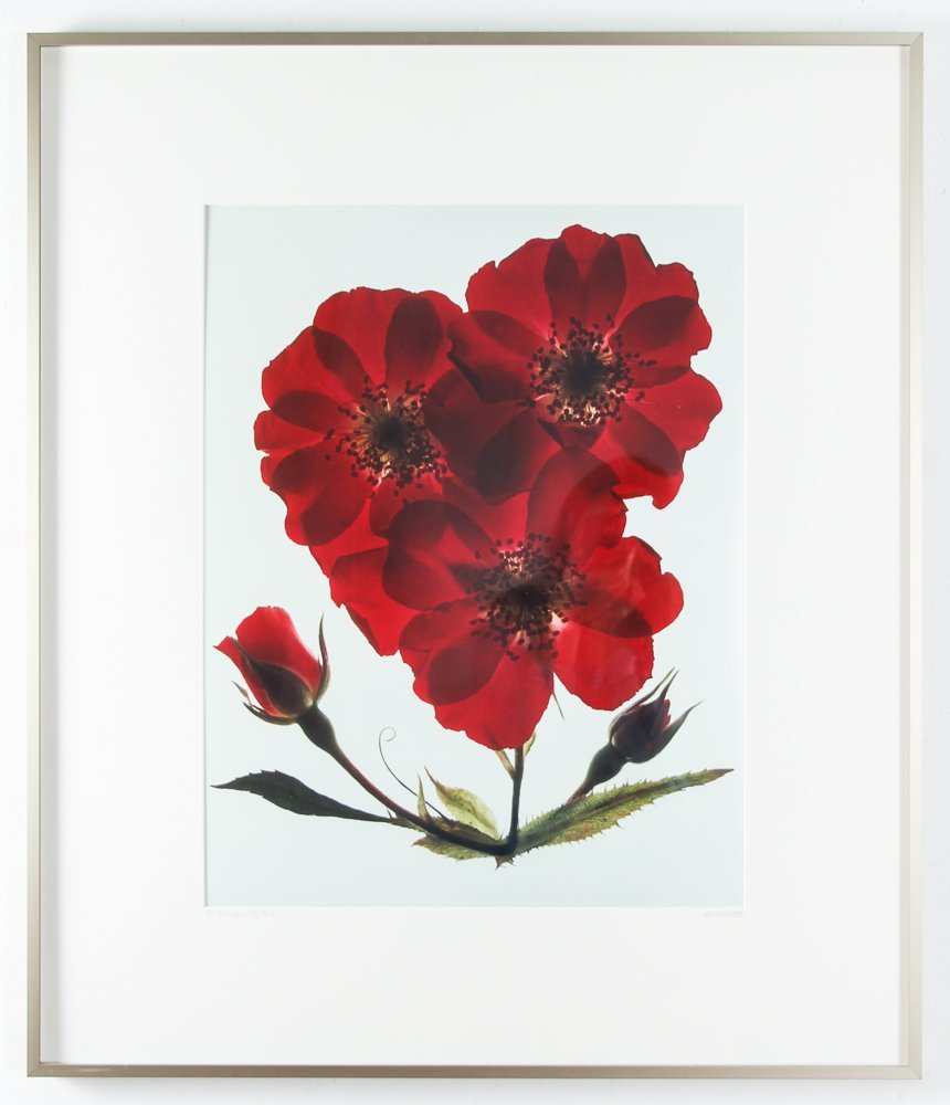 2 Ann Parker photograms Wild Roses & Red Anemone - 2