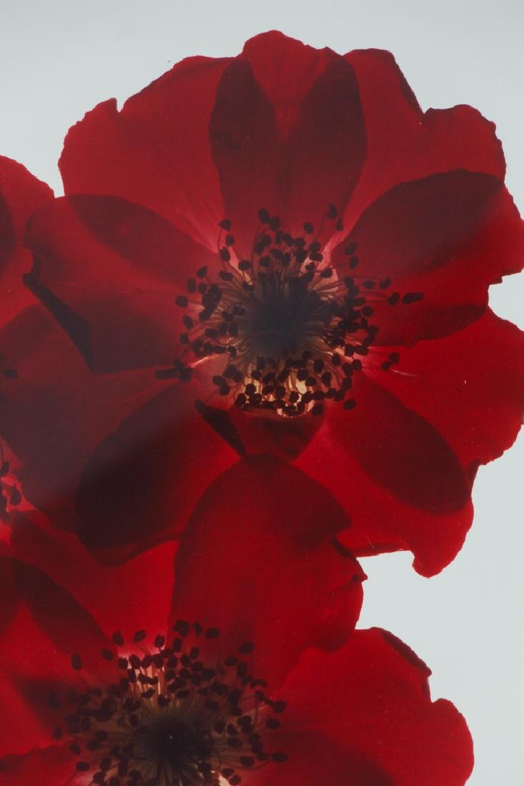 2 Ann Parker photograms Wild Roses & Red Anemone - 4