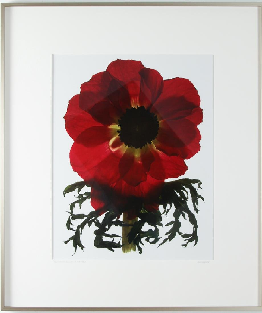 2 Ann Parker photograms Wild Roses & Red Anemone - 7