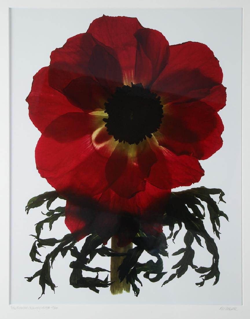 2 Ann Parker photograms Wild Roses & Red Anemone - 8