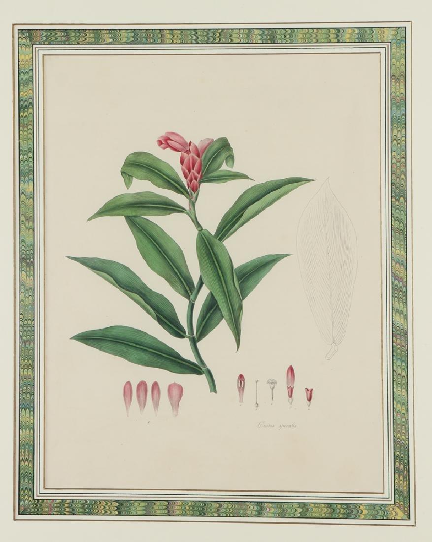 2 framed Antique Botanicals after William Sharp, 1828