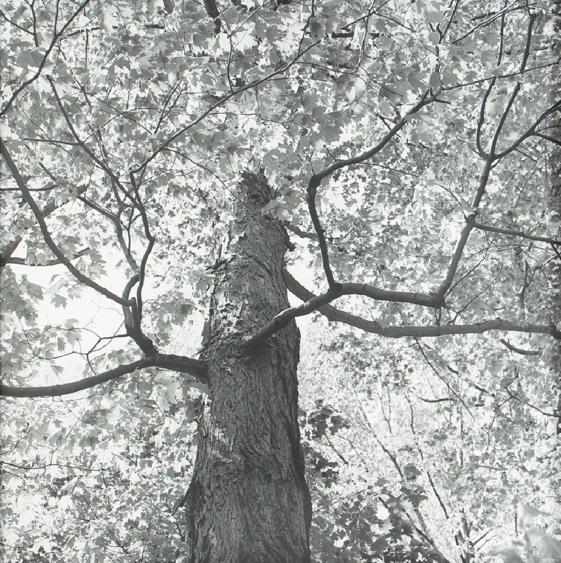 4 framed Sue Abramson Landscape Photo Studies