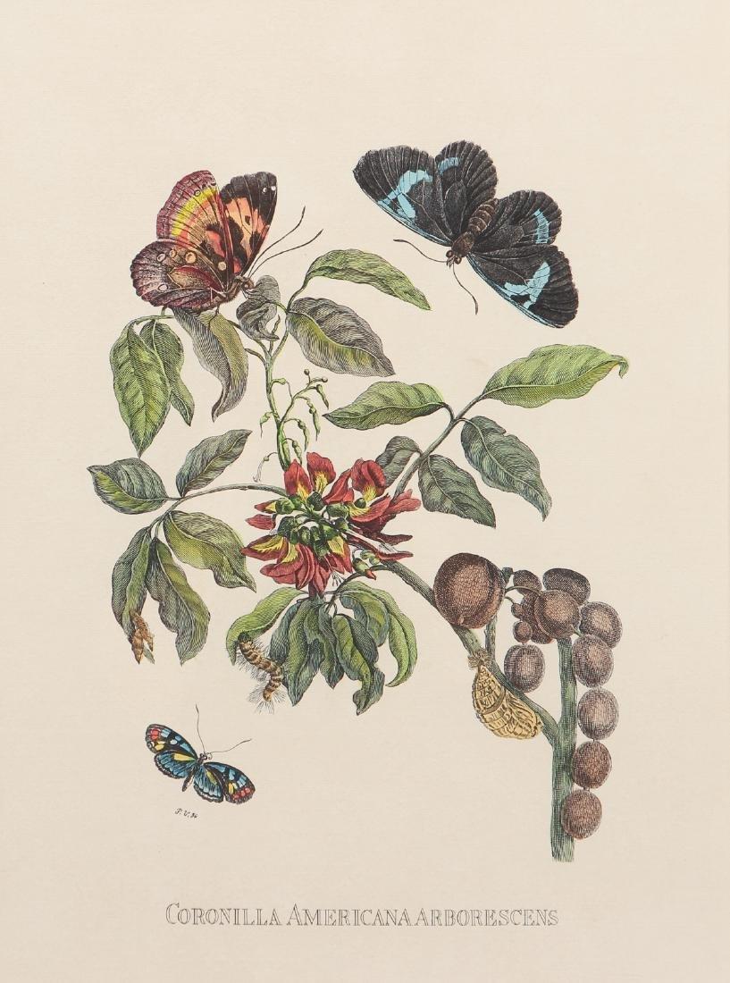 2 Framed Botanical Prints