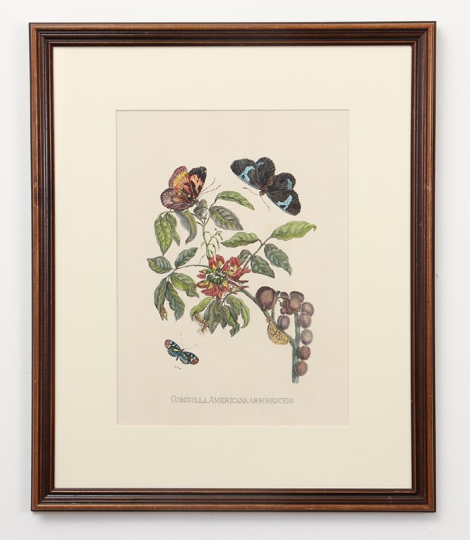2 Framed Botanical Prints - 2
