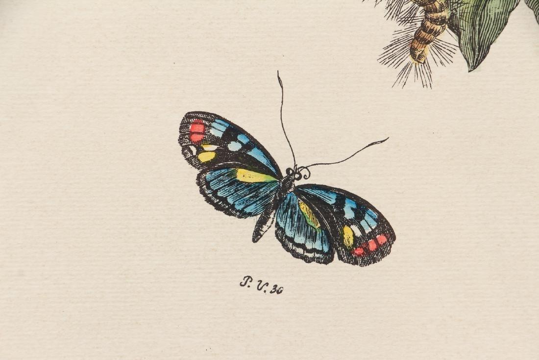 2 Framed Botanical Prints - 3