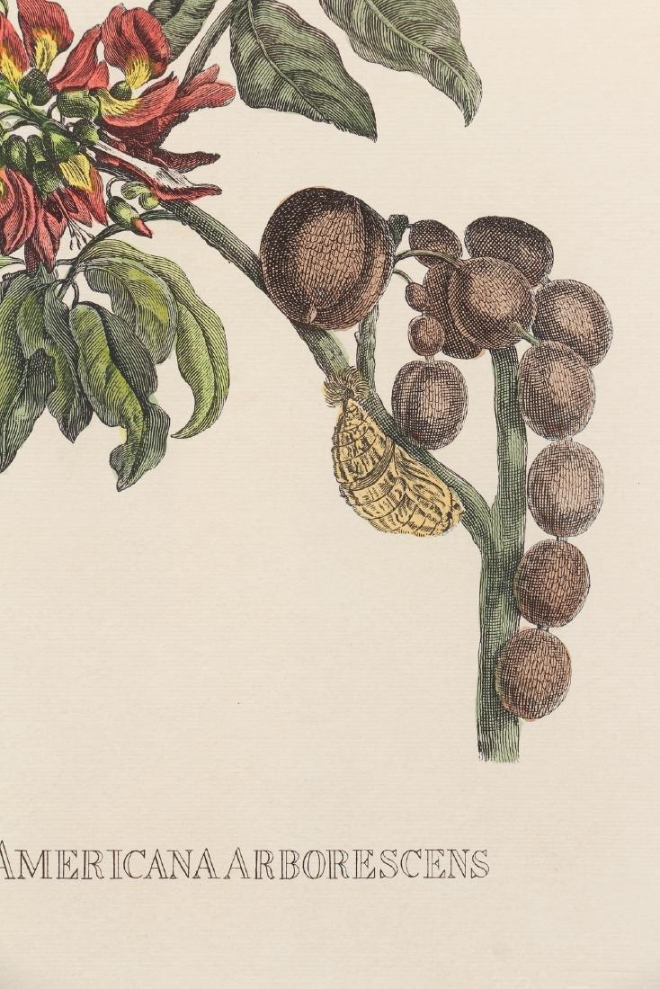 2 Framed Botanical Prints - 4