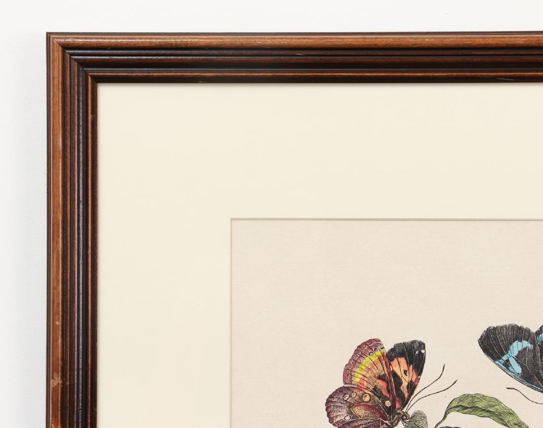 2 Framed Botanical Prints - 5